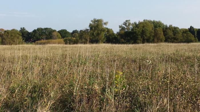 Hidden milkweeds